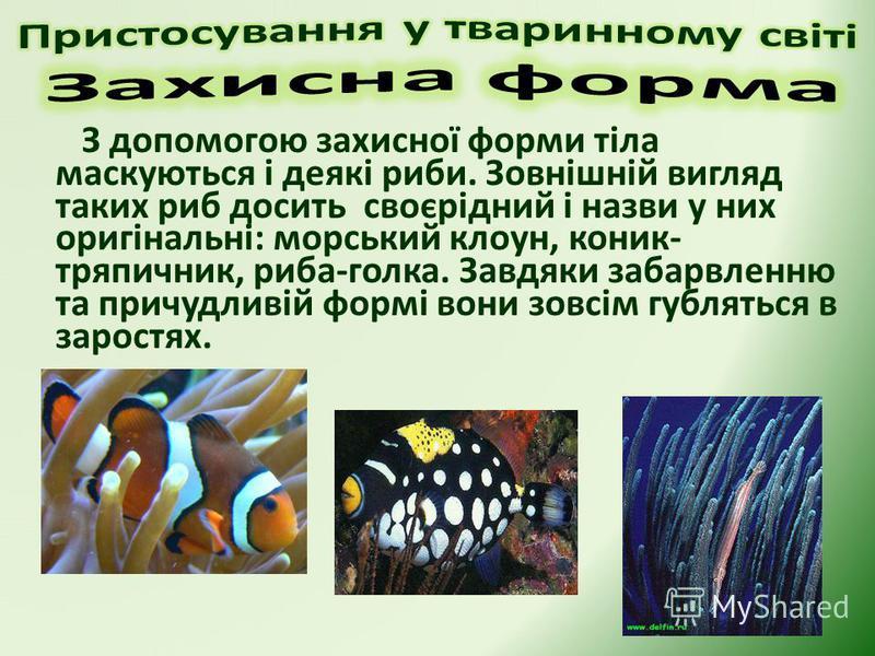 З допомогою захисної форми тіла маскуються і деякі риби. Зовнішній вигляд таких риб досить своєрідний і назви у них оригінальні: морський клоун, коник- тряпичник, риба-голка. Завдяки забарвленню та причудливій формі вони зовсім губляться в заростях.