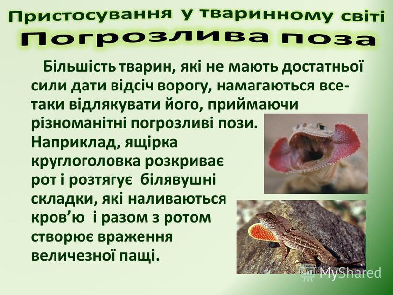 Більшість тварин, які не мають достатньої сили дати відсіч ворогу, намагаються все- таки відлякувати його, приймаючи різноманітні погрозливі пози. Наприклад, ящірка круглоголовка розкриває рот і розтягує білявушні складки, які наливаються кровю і раз