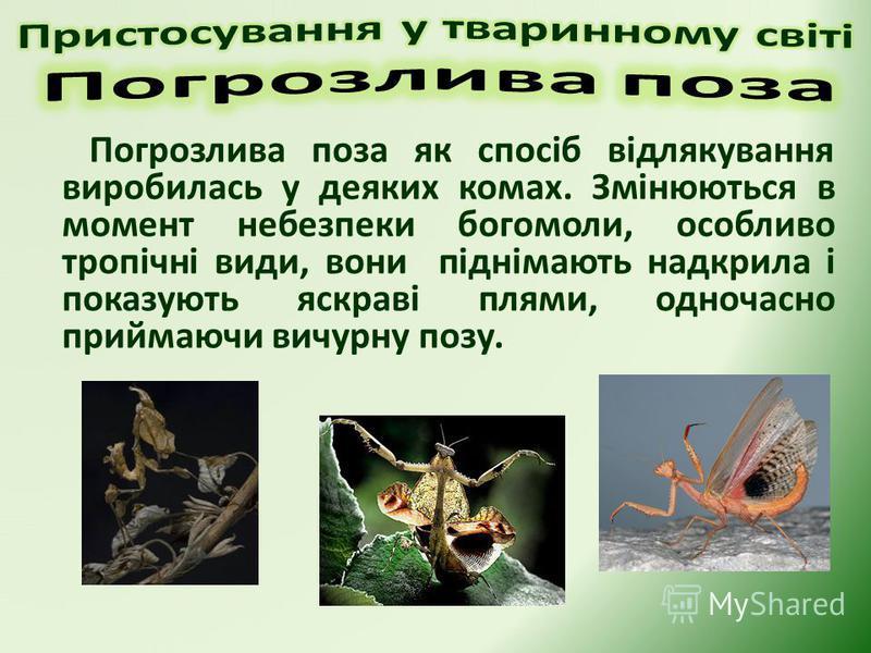 Погрозлива поза як спосіб відлякування виробилась у деяких комах. Змінюються в момент небезпеки богомоли, особливо тропічні види, вони піднімають надкрила і показують яскраві плями, одночасно приймаючи вичурну позу.