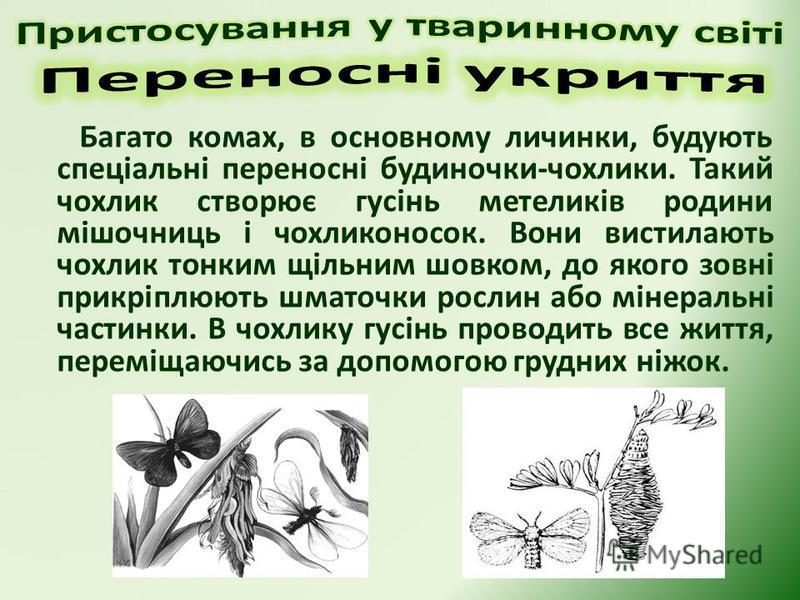 Багато комах, в основному личинки, будують спеціальні переносні будиночки-чохлики. Такий чохлик створює гусінь метеликів родини мішочниць і чохликоносок. Вони вистилають чохлик тонким щільним шовком, до якого зовні прикріплюють шматочки рослин або мі