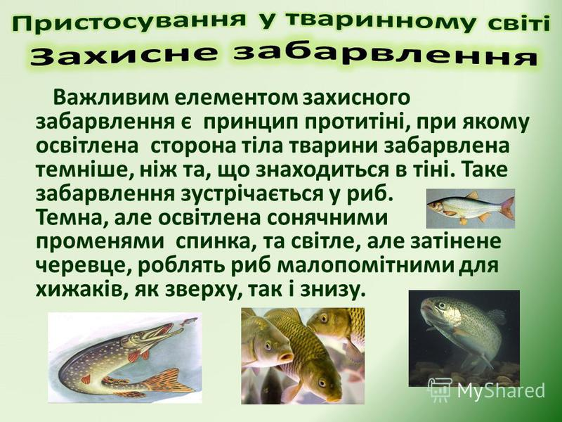 Важливим елементом захисного забарвлення є принцип протитіні, при якому освітлена сторона тіла тварини забарвлена темніше, ніж та, що знаходиться в тіні. Таке забарвлення зустрічається у риб. Темна, але освітлена сонячними променями спинка, та світле