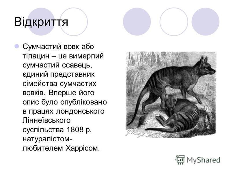 Відкриття Сумчастий вовк або тілацин – це вимерлий сумчастий ссавець, єдиний представник сімейства сумчастих вовків. Вперше його опис було опубліковано в працях лондонського Ліннеївського суспільства 1808 р. натуралістом- любителем Харрісом.
