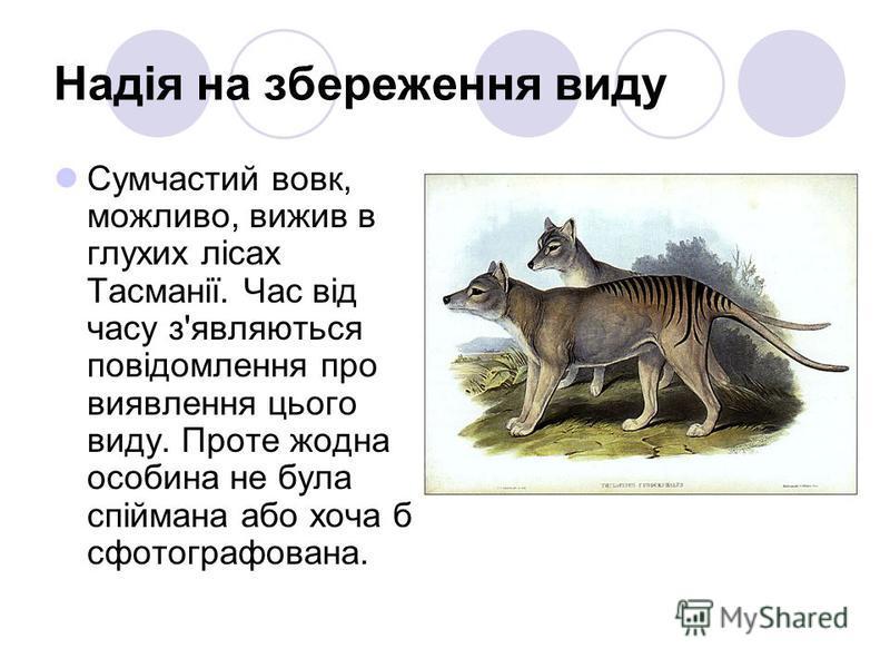 Надія на збереження виду Сумчастий вовк, можливо, вижив в глухих лісах Тасманії. Час від часу з'являються повідомлення про виявлення цього виду. Проте жодна особина не була спіймана або хоча б сфотографована.
