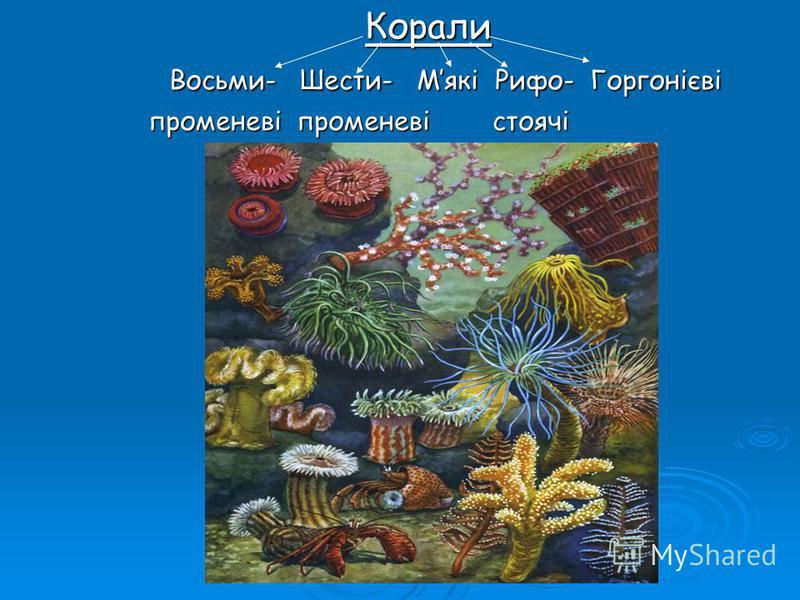 Корали Корали Восьми- Шести- Мякі Рифо- Горгонієві Восьми- Шести- Мякі Рифо- Горгонієві променеві променеві стоячі променеві променеві стоячі