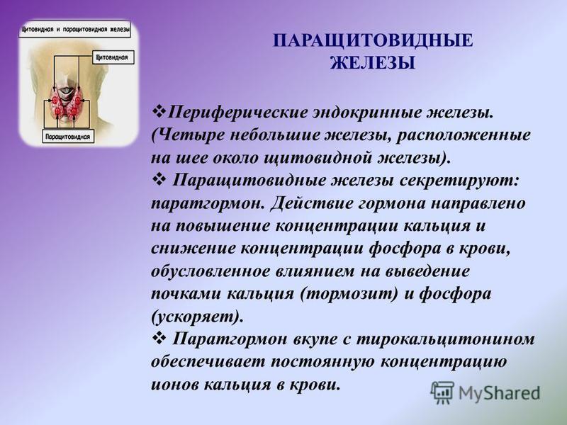 ПАРАЩИТОВИДНЫЕ ЖЕЛЕЗЫ Периферические эндокринные железы. (Четыре небольшие железы, расположенные на шее около щитовидной железы). Паращитовидные железы секретируют: паратгормон. Действие гормона направлено на повышение концентрации кальция и снижение