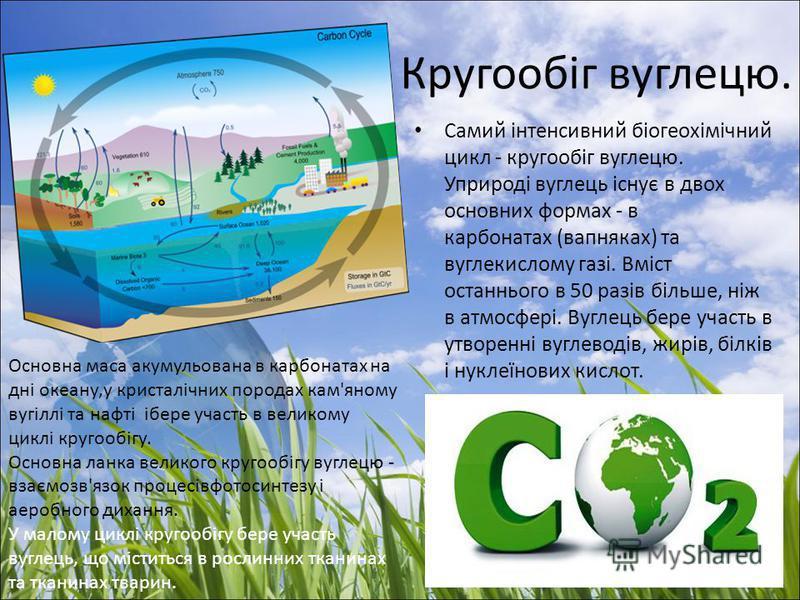 Кругообіг вуглецю. Самий інтенсивний біогеохімічний цикл - кругообіг вуглецю. Уприроді вуглець існує в двох основних формах - в карбонатах (вапняках) та вуглекислому газі. Вміст останнього в 50 разів більше, ніж в атмосфері. Вуглець бере участь в утв