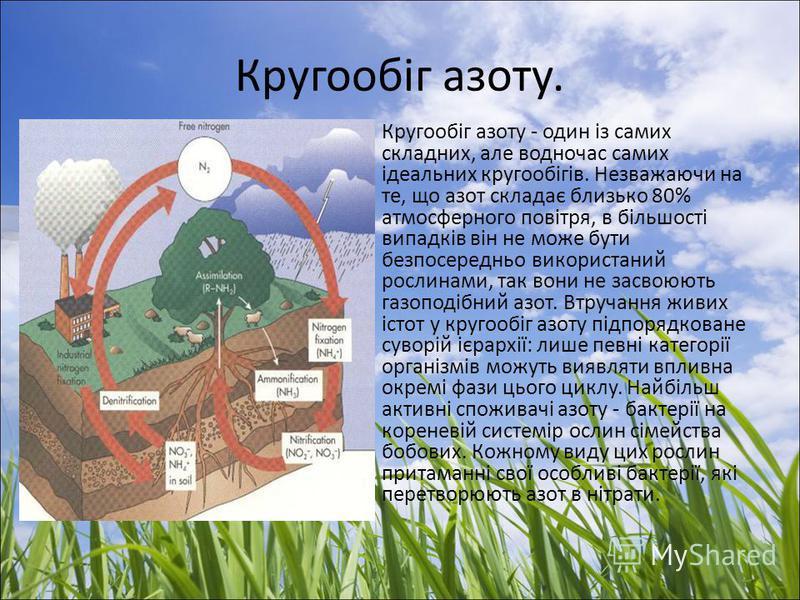 Кругообіг азоту. Кругообіг азоту - один із самих складних, але водночас самих ідеальних кругообігів. Незважаючи на те, що азот складає близько 80% атмосферного повітря, в більшості випадків він не може бути безпосередньо використаний рослинами, так в