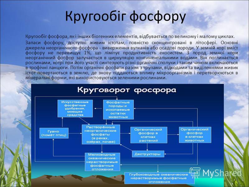Кругообіг фосфору Кругообіг фосфора, як і інших біогенних елементів, відбувається по великому і малому циклах. Запаси фосфору, доступні живим істотам, повністю сконцентровані в літосфері. Основні джерела неорганічного фосфора - виверження вулканів аб