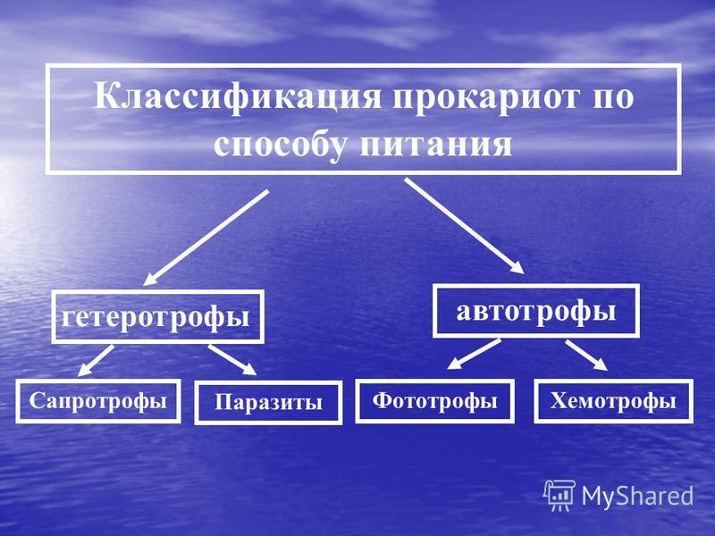 Классификация прокариот по способу питания гетеротрофы автотрофы Сапротрофы Паразиты Фототрофы Хемотрофы