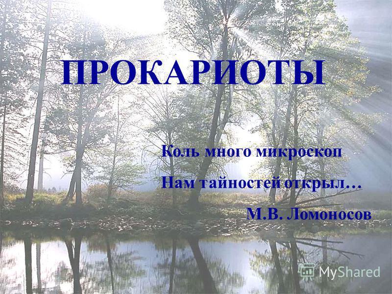 ПРОКАРИОТЫ Коль много микроскоп Нам тайностей открыл… М.В. Ломоносов