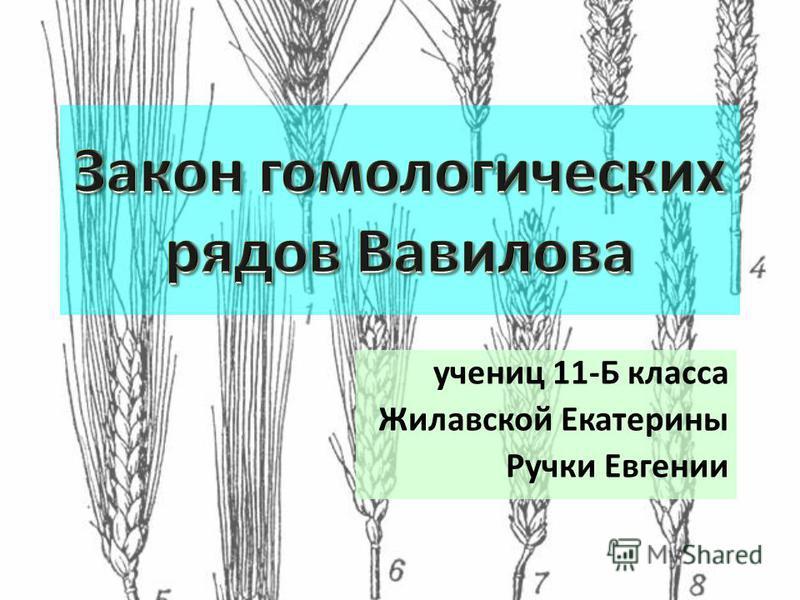 учениц 11-Б класса Жилавской Екатерины Ручки Евгении