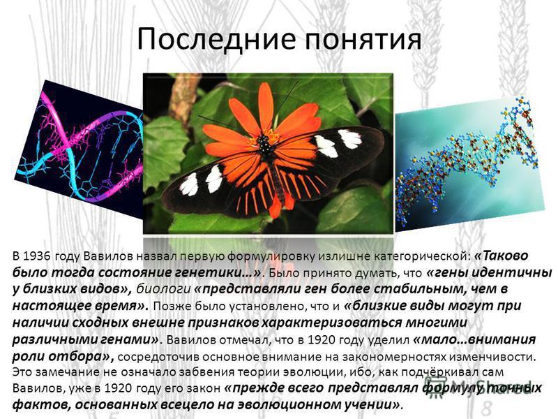 Последние понятия В 1936 году Вавилов назвал первую формулировку излишне категорической: «Таково было тогда состояние генетики…». Было принято думать, что «гены идентичны у близких видов», биологи «представляли ген более стабильным, чем в настоящее в