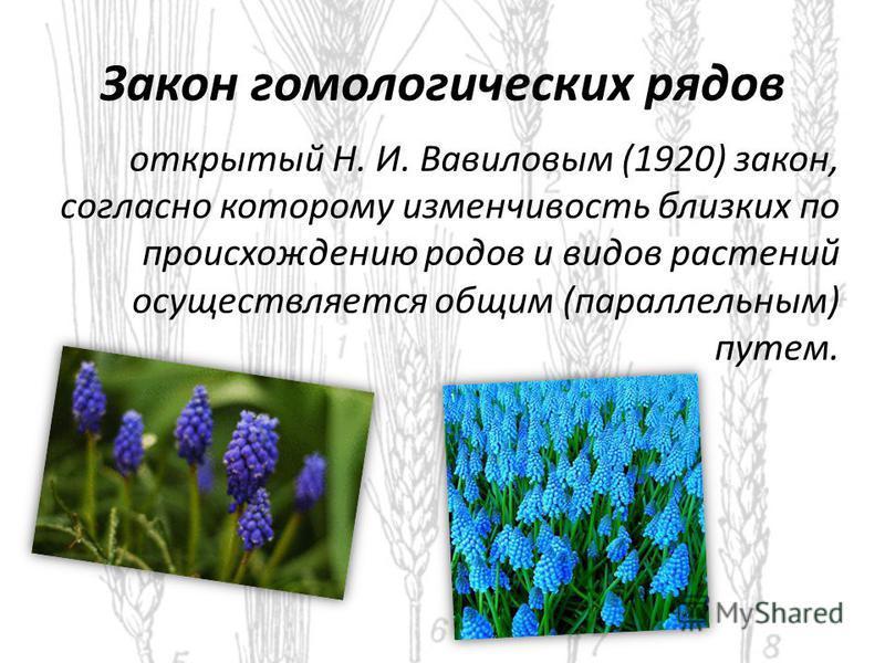 Закон гомологических рядов открытый Н. И. Вавиловым (1920) закон, согласно которому изменчивость близких по происхождению родов и видов растений осуществляется общим (параллельным) путем.
