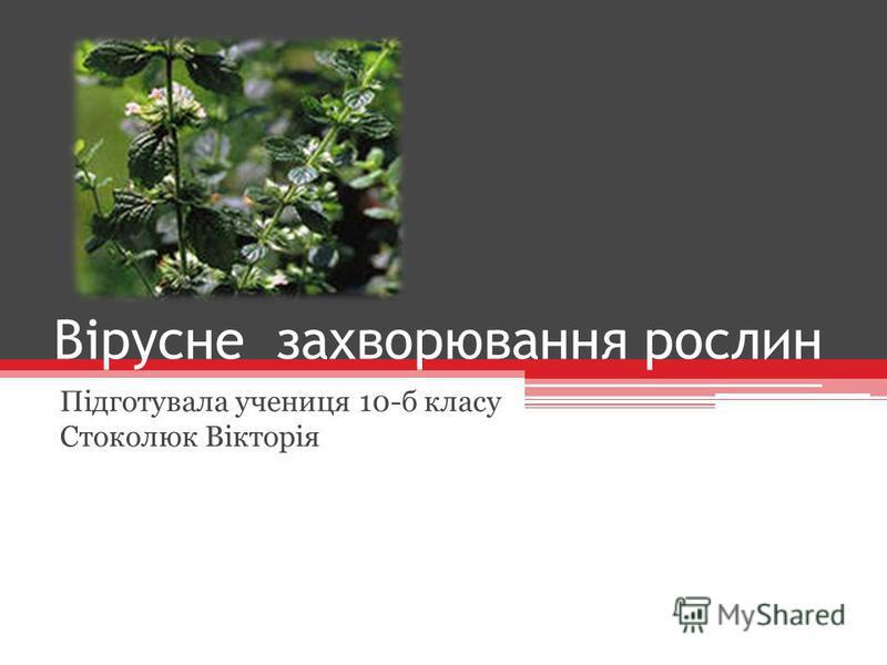 Вірусне захворювання рослин Підготувала учениця 10-б класу Стоколюк Вікторія