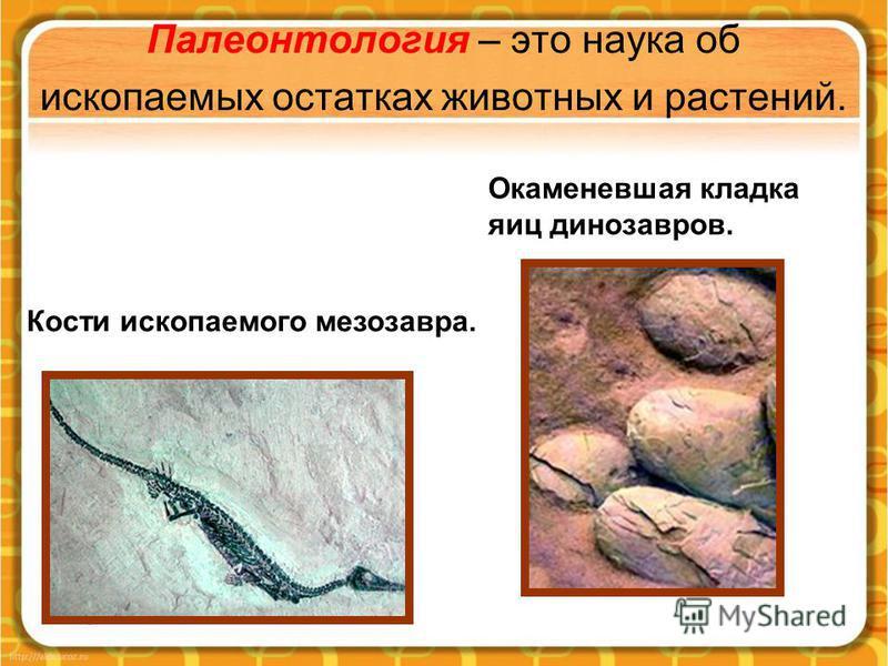 Палеонтология – это наука об ископаемых остатках животных и растений. Кости ископаемого мезозавра. Окаменевшая кладка яиц динозавров.