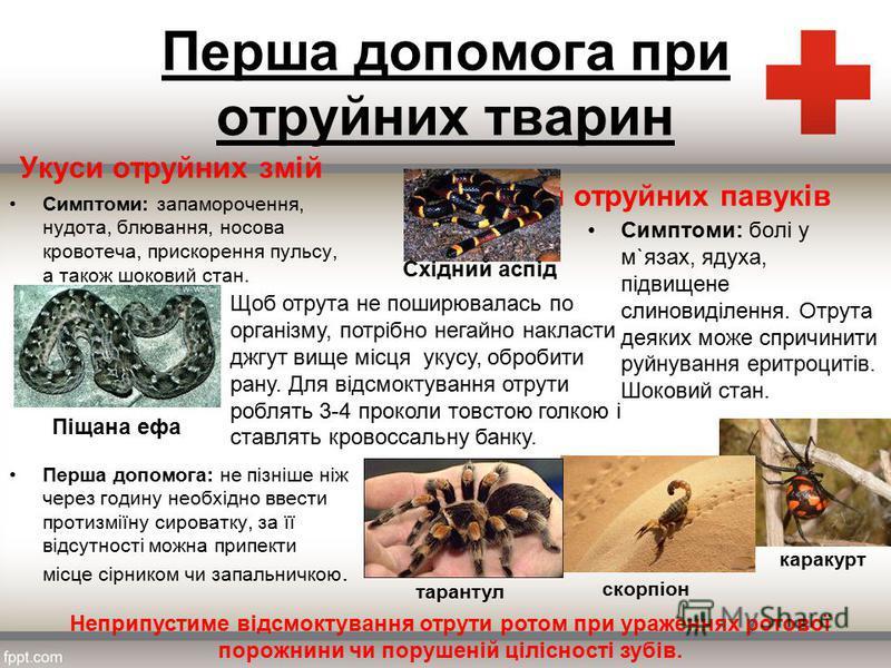 реферат на тему праздники россии