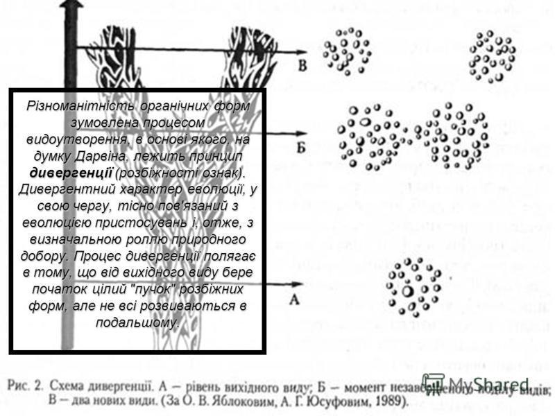 Різноманітність органічних форм зумовлена процесом видоутворення, в основі якого, на думку Дарвіна, лежить принцип дивергенції (розбіжності ознак). Дивергентний характер еволюції, у свою чергу, тісно пов'язаний з еволюцією пристосувань і, отже, з виз