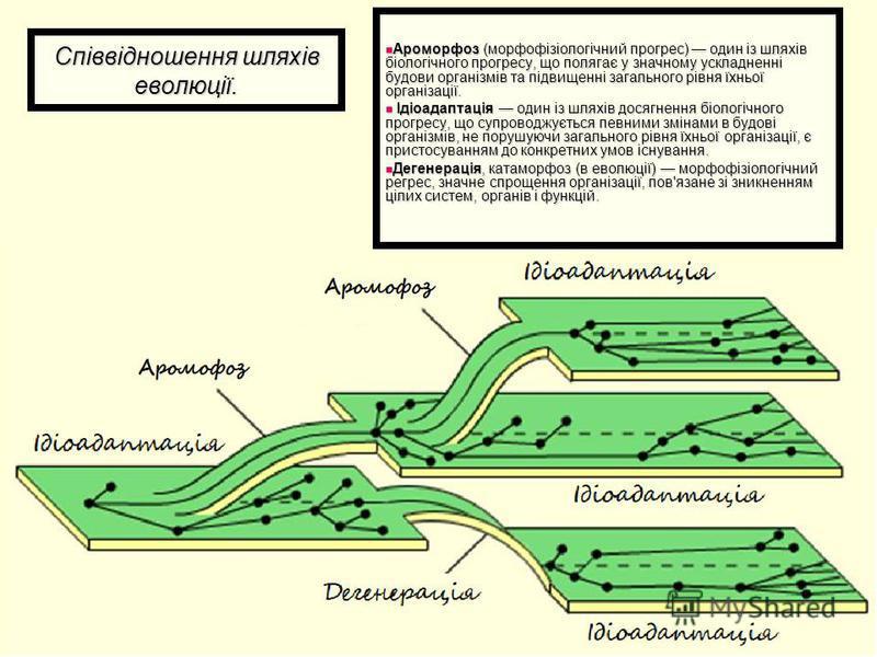 Співвідношення шляхів еволюції. Ароморфоз (морфофізіологічний прогрес) один із шляхів біологічного прогресу, що полягає у значному ускладненні будови організмів та підвищенні загального рівня їхньої організації. Ароморфоз (морфофізіологічний прогрес)