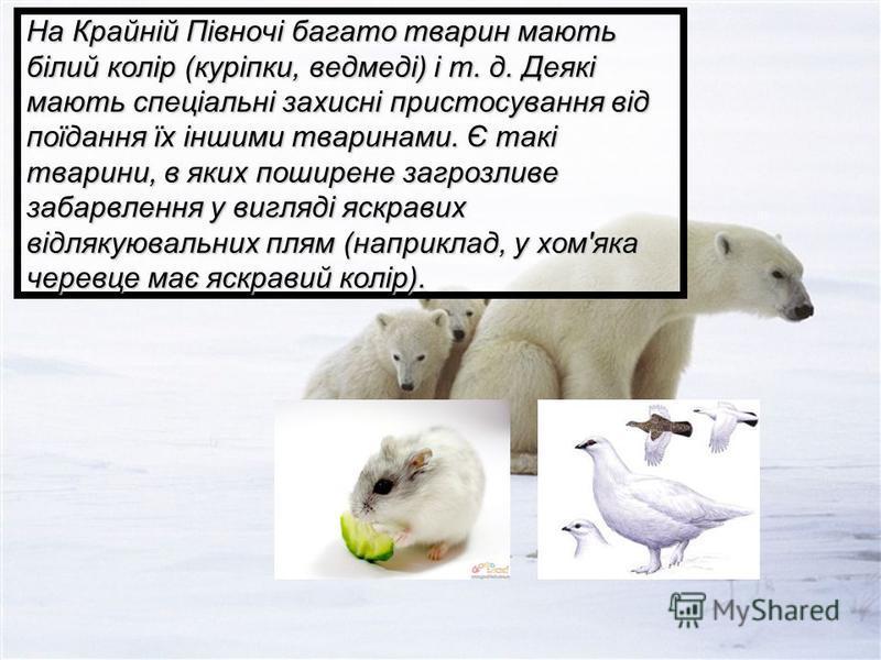 На Крайній Півночі багато тварин мають білий колір (куріпки, ведмеді) і т. д. Деякі мають спеціальні захисні пристосування від поїдання їх іншими тваринами. Є такі тварини, в яких поширене загрозливе забарвлення у вигляді яскравих відлякуювальних пля