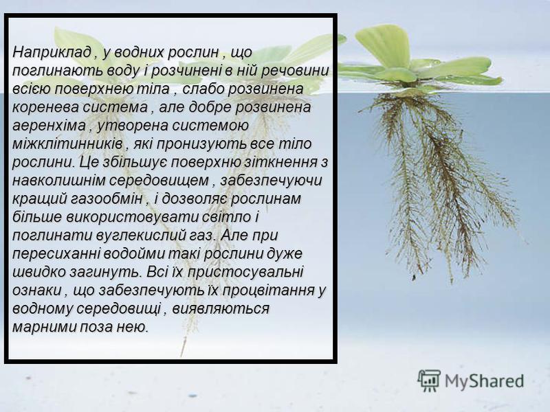 Наприклад, у водних рослин, що поглинають воду і розчинені в ній речовини всією поверхнею тіла, слабо розвинена коренева система, але добре розвинена аеренхіма, утворена системою міжклітинників, які пронизують все тіло рослини. Це збільшує поверхню з