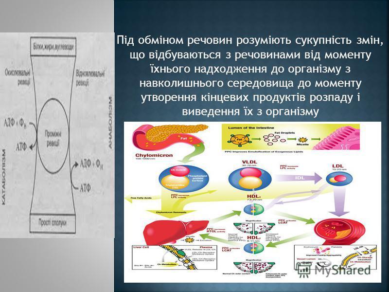 Під обміном речовин розуміють сукупність змін, що відбуваються з речовинами від моменту їхнього надходження до організму з навколишнього середовища до моменту утворення кінцевих продуктів розпаду і виведення їх з організму