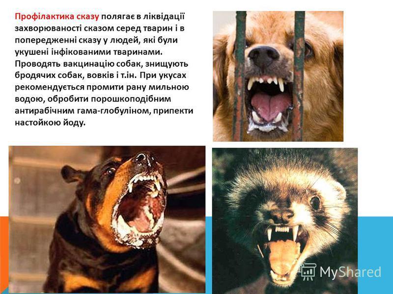 Профілактика сказу полягає в ліквідації захворюваності сказом серед тварин і в попередженні сказу у людей, які були укушені інфікованими тваринами. Проводять вакцинацію собак, знищують бродячих собак, вовків і т.ін. При укусах рекомендується промити