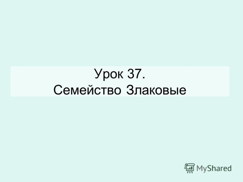 Урок 37. Семейство Злаковые