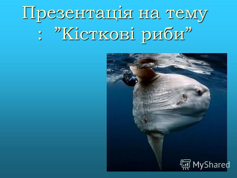 Презентація на тему : Кісткові риби