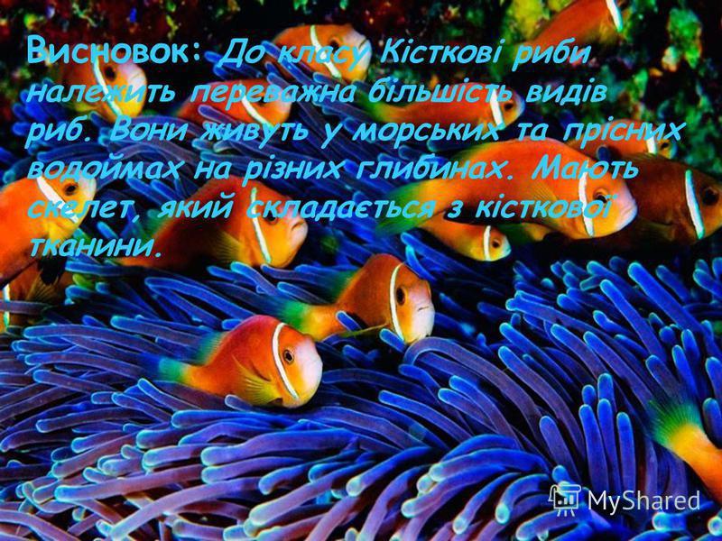 Висновок: До класу Кісткові риби належить переважна більшість видів риб. Вони живуть у морських та прісних водоймах на різних глибинах. Мають скелет, який складається з кісткової тканини.