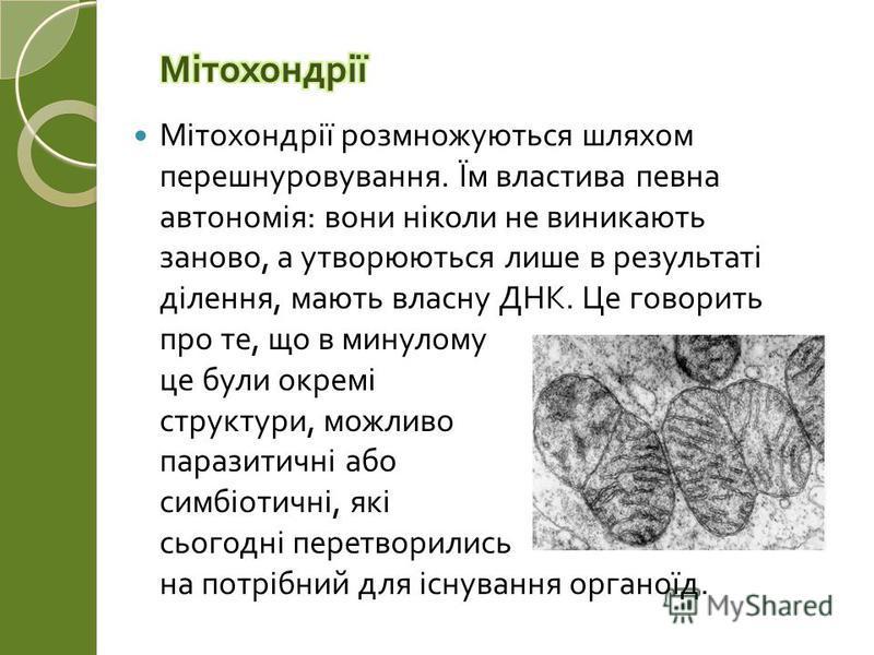 Мітохондрії розмножуються шляхом перешнуровування. Їм властива певна автономія : вони ніколи не виникають заново, а утворюються лише в результаті ділення, мають власну ДНК. Це говорить про те, що в минулому це були окремі структури, можливо паразитич