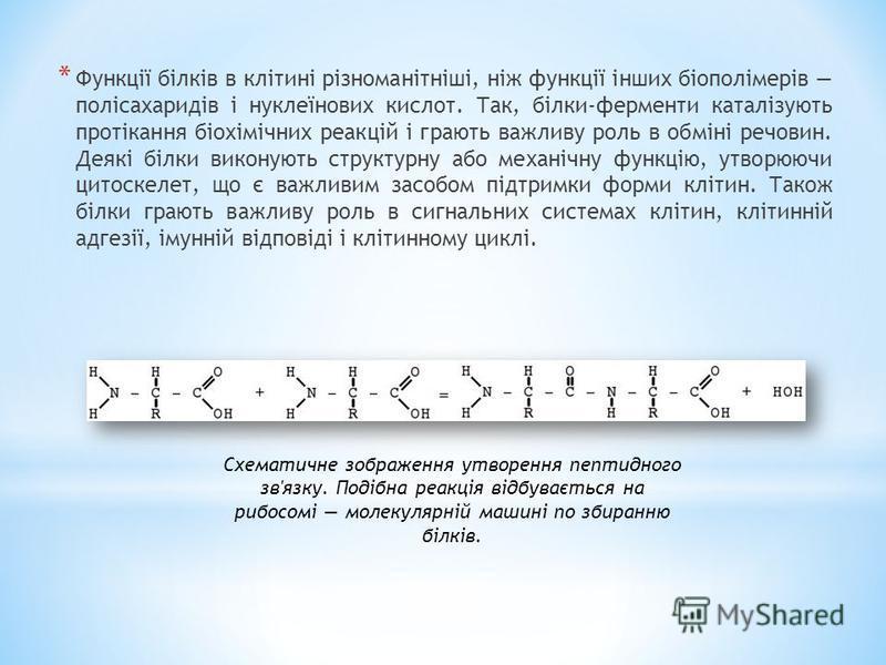 * Функції білків в клітині різноманітніші, ніж функції інших біополімерів полісахаридів і нуклеїнових кислот. Так, білки-ферменти каталізують протікання біохімічних реакцій і грають важливу роль в обміні речовин. Деякі білки виконують структурну або