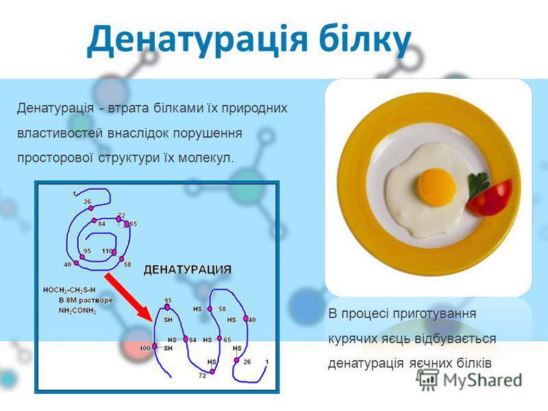 Денатурація білку В процесі приготування курячих яєць відбувається денатурація яєчних білків Денатурація - втрата білками їх природних властивостей внаслідок порушення просторової структури їх молекул.
