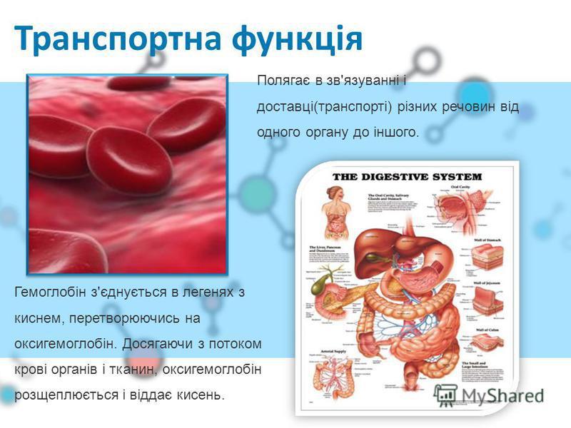 Транспортна функція Гемоглобін з'єднується в легенях з киснем, перетворюючись на оксигемоглобін. Досягаючи з потоком крові органів і тканин, оксигемоглобін розщеплюється і віддає кисень. Полягає в зв'язуванні і доставці(транспорті) різних речовин від