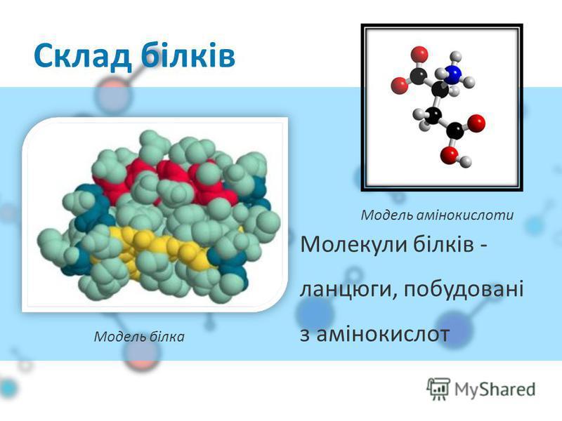 Молекули білків - ланцюги, побудовані з амінокислот Склад білків Модель білка Модель амінокислоти