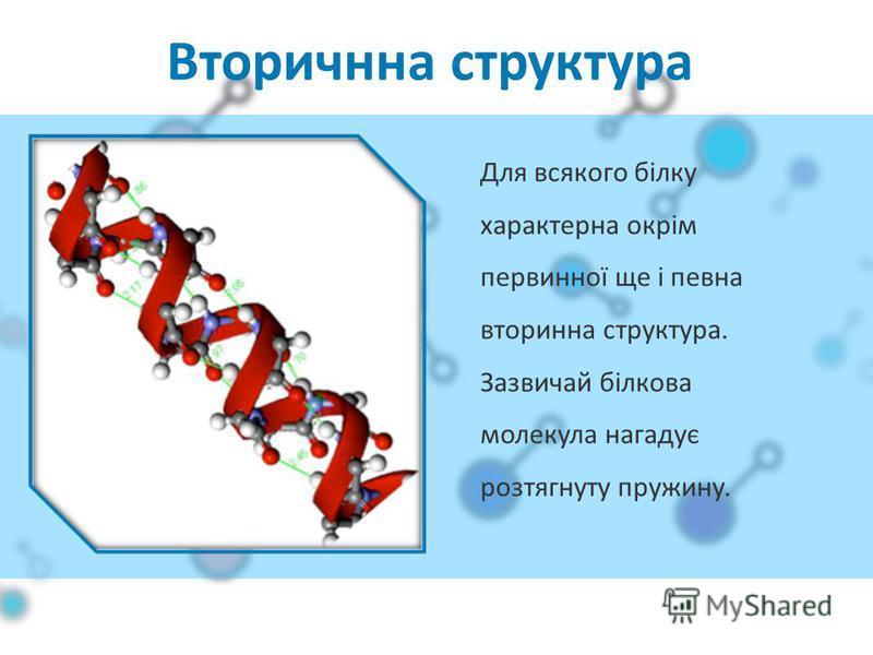 Вторичнна структура Для всякого білку характерна окрім первинної ще і певна вторинна структура. Зазвичай білкова молекула нагадує розтягнуту пружину.