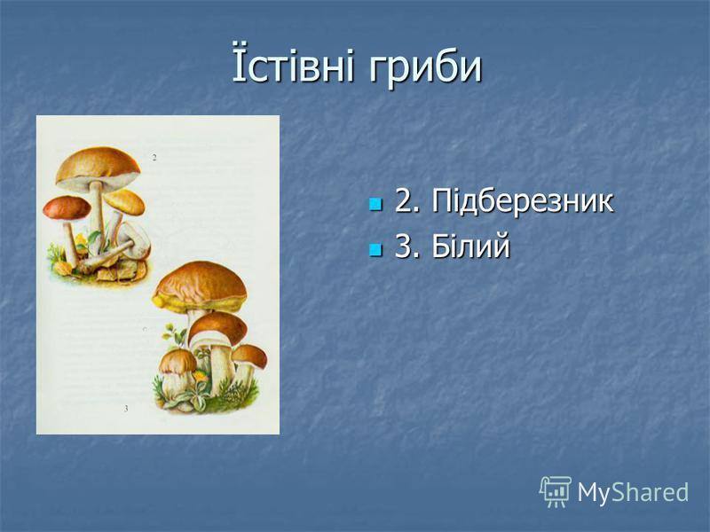 Їстівні гриби 2. Підберезник 2. Підберезник 3. Білий 3. Білий