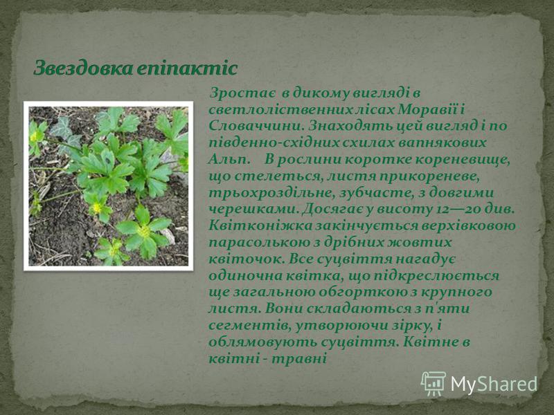 Зростає в дикому вигляді в светлоліственних лісах Моравії і Словаччини. Знаходять цей вигляд і по південно-східних схилах вапнякових Альп. В рослини коротке кореневище, що стелеться, листя прикореневе, трьохроздільне, зубчасте, з довгими черешками. Д