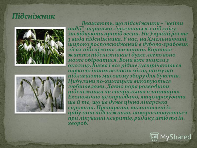 Вважають, що підсніжники – квіти надії -першими зявляються з-під снігу, засвідчують прихід весни. На Україні росте 3 вида підсніжника. У нас, на Хмельниччині, широко росповсюджений в дубово-грабових лісах підсніжник звичайний. Коротке життя підсніжни