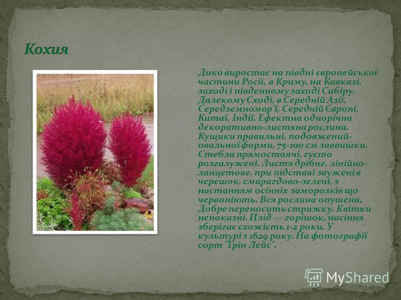 Дико виростає на півдні європейської частини Росії, в Криму, на Кавказі, заході і південному заході Сибіру, Далекому Сході, в Середній Азії, Середземномор'ї, Середній Європі, Китаї, Індії. Ефектна однорічна декоративно-листяна рослина. Кущики правиль