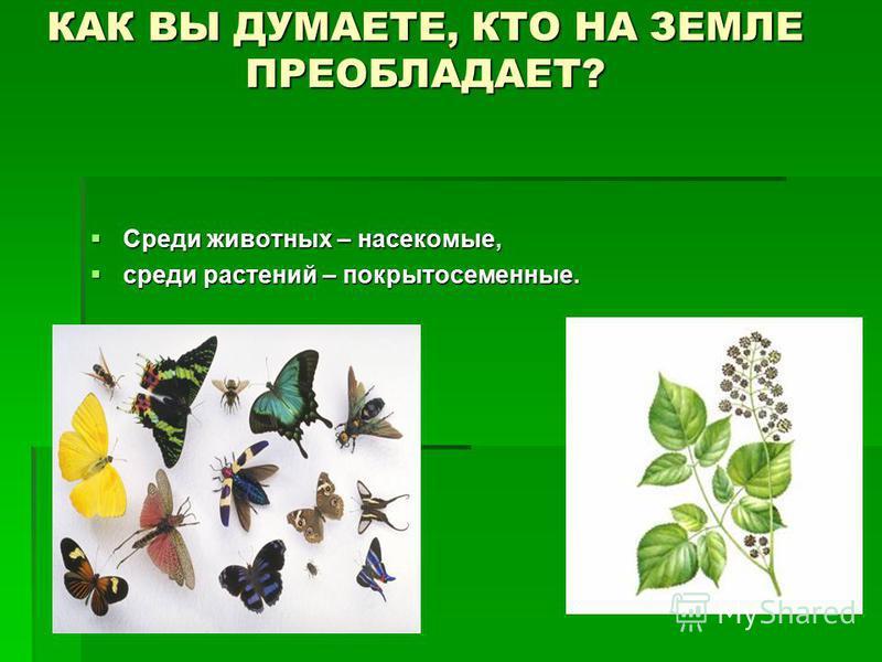 КАК ВЫ ДУМАЕТЕ, КТО НА ЗЕМЛЕ ПРЕОБЛАДАЕТ? Среди животных – насекомые, Среди животных – насекомые, среди растений – покрытосеменные. среди растений – покрытосеменные.