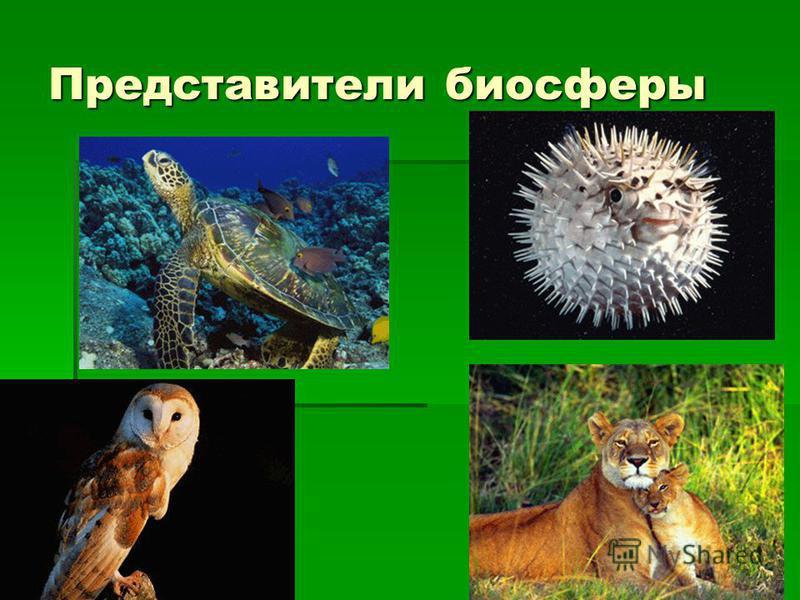 Представители биосферы