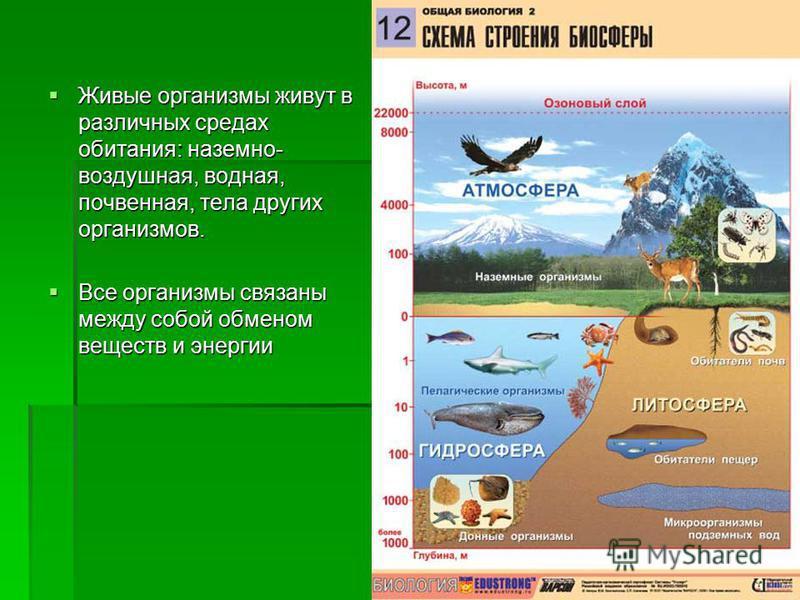 Живые организмы живут в различных средах обитания: наземно- воздушная, водная, почвенная, тела других организмов. Живые организмы живут в различных средах обитания: наземно- воздушная, водная, почвенная, тела других организмов. Все организмы связаны