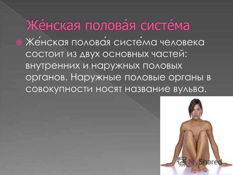 Женская половая система человека состоит из двух основных частей: внутренних и наружных половых органов. Наружные половые органы в совокупности носят название вульва.