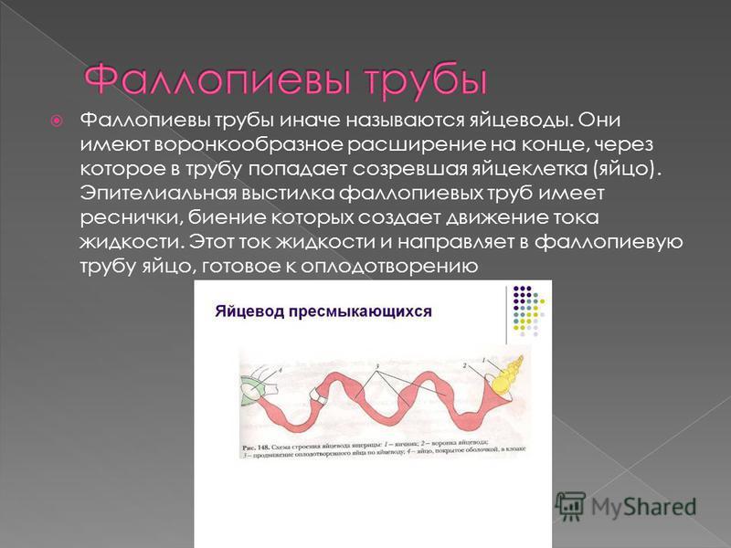 Фаллопиевы трубы иначе называются яйцеводы. Они имеют воронкообразное расширение на конце, через которое в трубу попадает созревшая яйцеклетка (яйцо). Эпителиальная выстилка фаллопиевых труб имеет реснички, биение которых создает движение тока жидкос