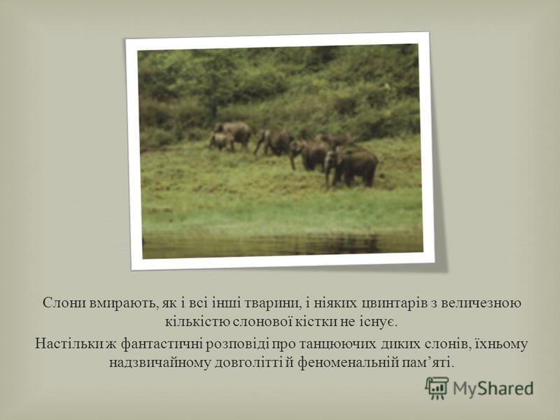 Про слонів дотепер існують багато фантастичних розповідей. Так, нерідко говорять, що слони нібито бояться мишей, які можуть залізти до них у хобот. Не важко уявити собі, що може трапитися з такою мишею : адже коли слон дує, зі струменем повітря, що в