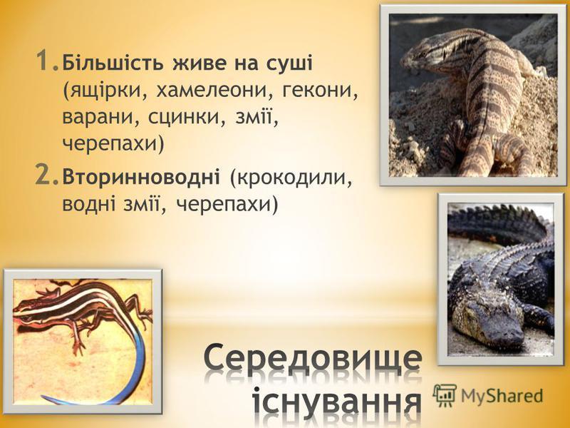 1. Більшість живе на суші (ящірки, хамелеони, гекони, варани, сцинки, змії, черепахи) 2. Вторинноводні (крокодили, водні змії, черепахи)