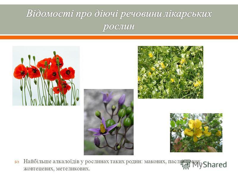 Найбільше алкалоїдів у рослинах таких родин : макових, пасльонових, жовтецевих, метеликових.