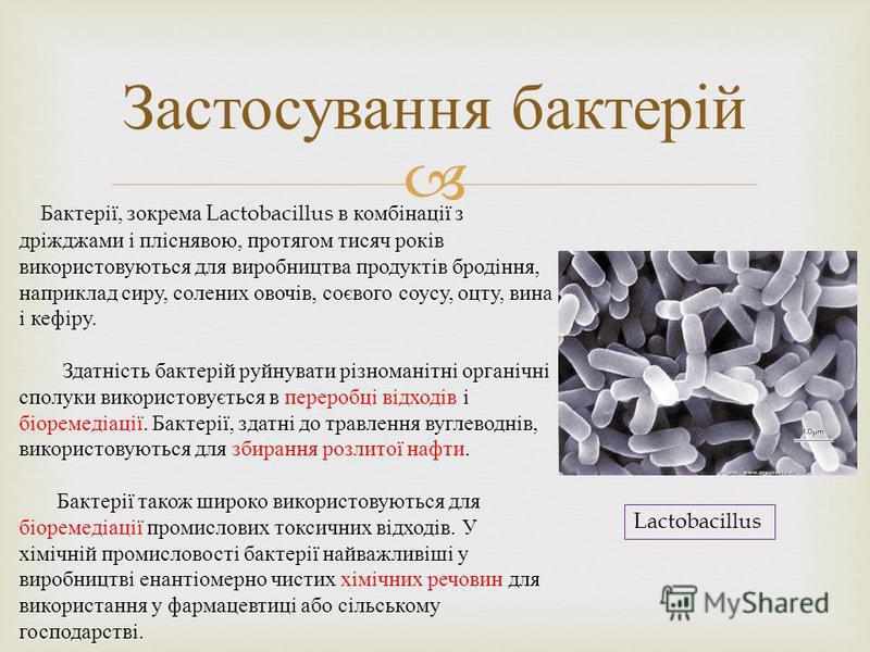 Застосування бактерій Бактерії, зокрема Lactobacillus в комбінації з дріжджами і пліснявою, протягом тисяч років використовуються для виробництва продуктів бродіння, наприклад сиру, солених овочів, соєвого соусу, оцту, вина і кефіру. Здатність бактер
