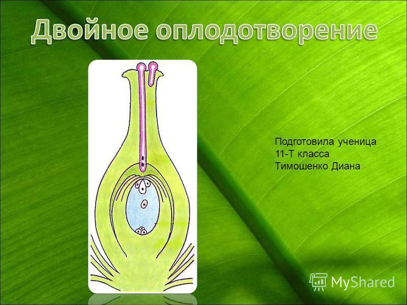 Подготовила ученица 11-Т класса Тимошенко Диана