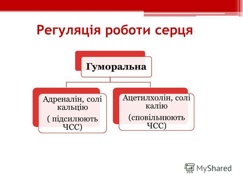 Регуляція роботи серця Гуморальна Адреналін, солі кальцію ( підсилюють ЧСС) Ацетилхолін, солі калію (сповільнюють ЧСС)